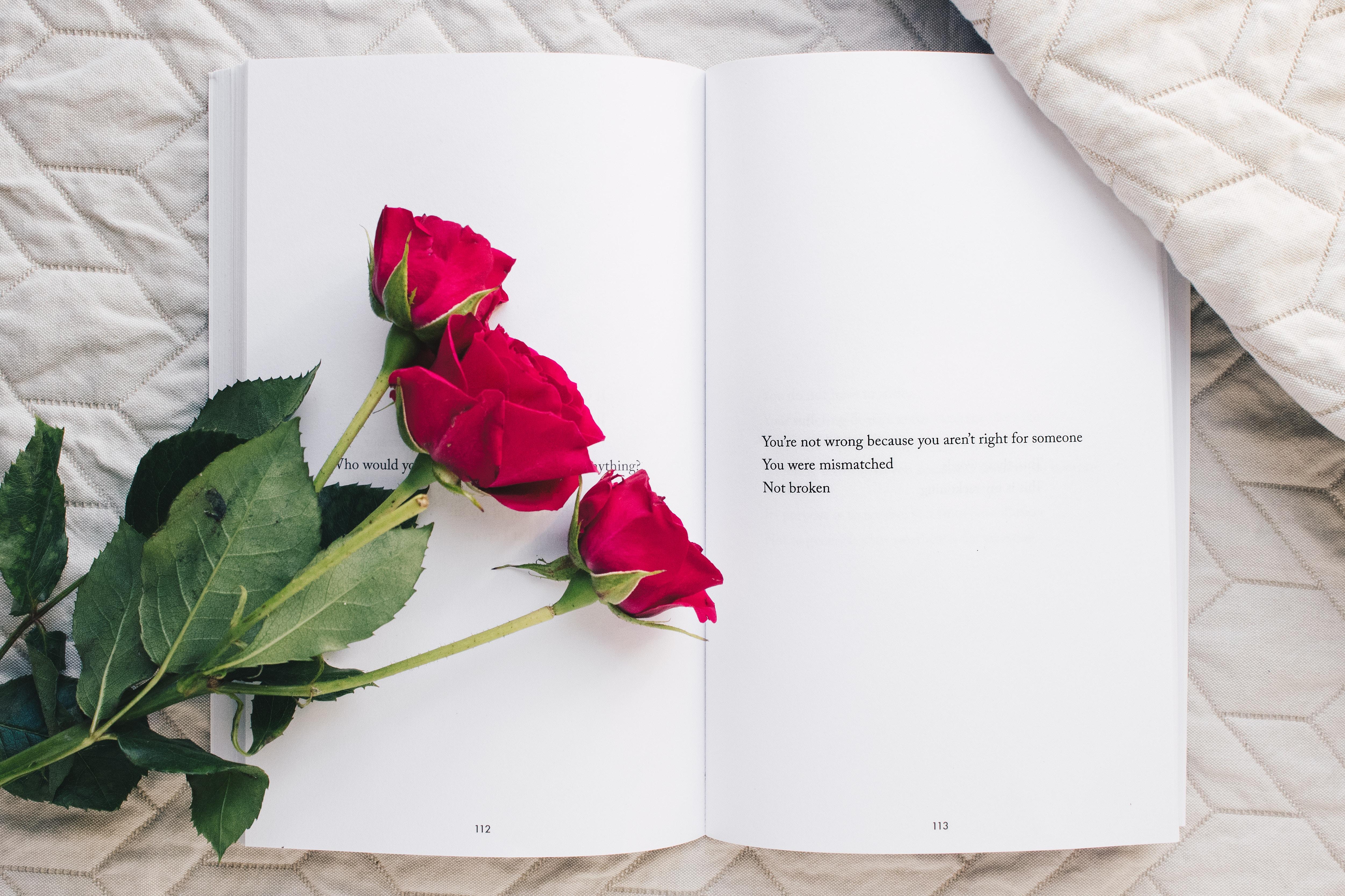 Sélection littéraire de novembre: l'amour, toujours